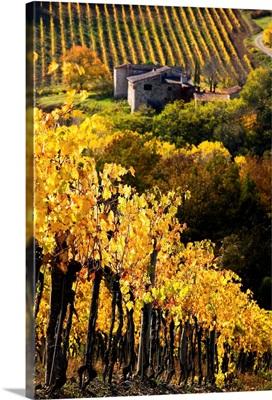 Italy, Tuscany, Chianti, Greve in Chianti, vineyards