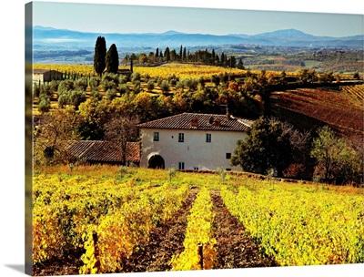 Italy, Tuscany, Chianti, Mediterranean area, Firenze district, Brolio