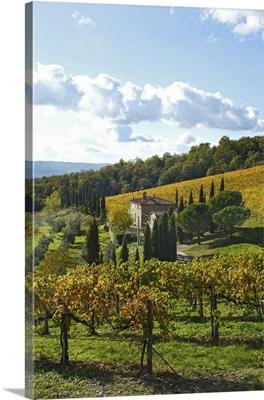 Italy, Tuscany, Chianti, Mediterranean area, Firenze district, Vineyard