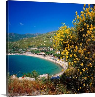 Italy, Tuscany, Elba, Cavoli, ginestre e bay
