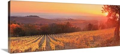 Italy, Tuscany, Gaiole in Chianti, Sunset on Barone Ricasoli vineyards at Brolio castle