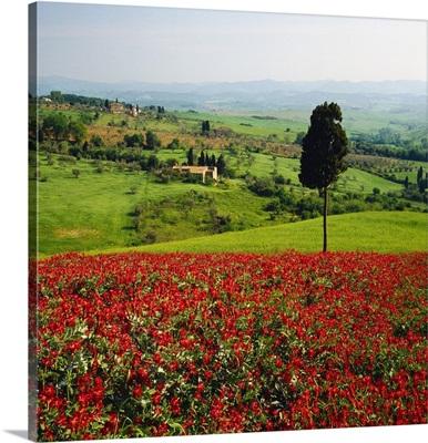 Italy, Tuscany, Hills near Volterra