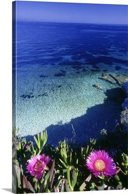 Italy, Tuscany, Livorno district, Tuscan Archipelago, Elba island, Capo Bianco