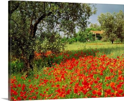 Italy, Tuscany, Maremma, Country