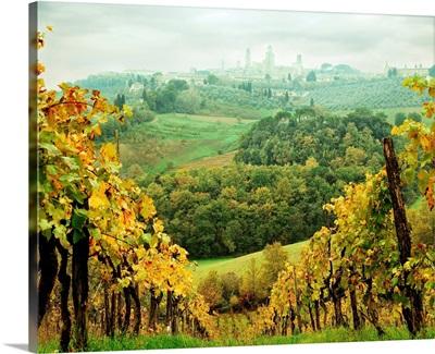 Italy, Tuscany, San Gimignano, Vineyards and San Gimignano in background