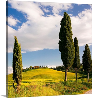 Italy, Tuscany, Siena District, Crete Senesi, Landscape Near Siena