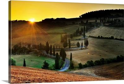 Italy, Tuscany, Siena district, Orcia Valley, Tree lined road near Pienza