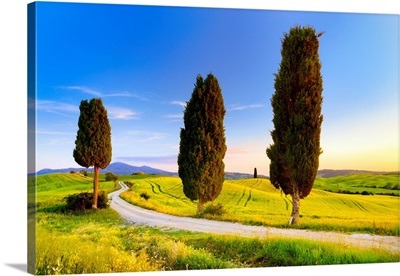 Italy, Tuscany, Siena District, Orcia Valley, Tuscan Landscape Near Pienza