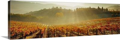 Italy, Tuscany, Siena, Piazza, vineyards at sunrise