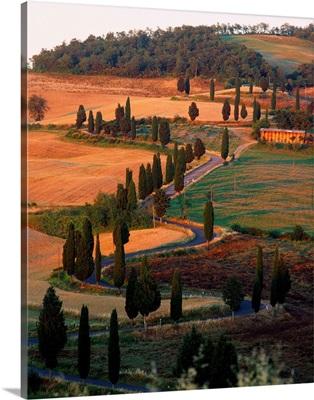 Italy, Tuscany, tree lined road near Pienza