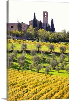 Italy, Tuscany, Val d'Elsa, Countryside near San Gimignano village