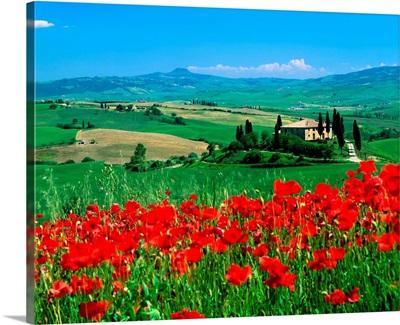 Italy, Tuscany, Val d'Orcia landscape