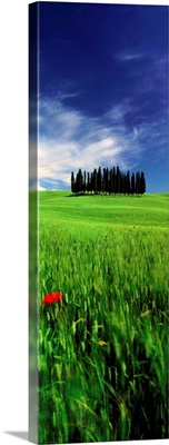Italy, Tuscany, Val d'Orcia, typical countryside