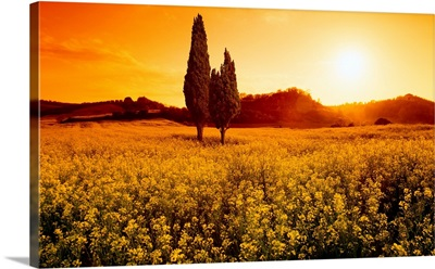 Italy, Tuscany, Val d'Orcia, typical landscape