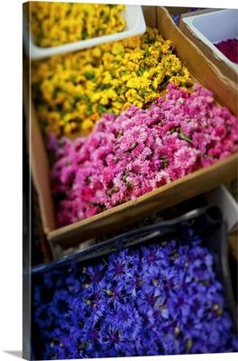 Italy, Umbria, Mediterranean area, Perugia district, Spello, Infiorata, flowers
