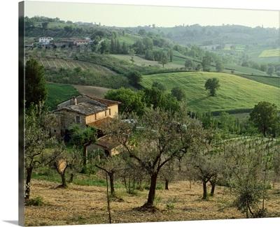 Italy, Umbria, Montefalco, olive trees
