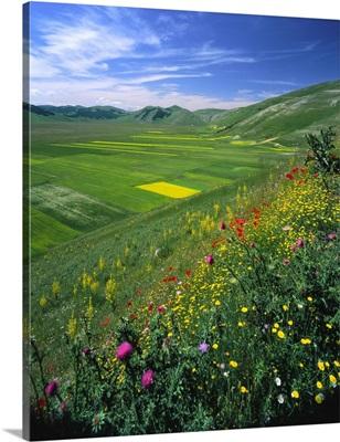 Italy, Umbria, Monti Sibillini, Castelluccio di Norcia, Piano Grande