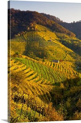 Italy, Valdobbiadene, Prosecco vineyards near Guia village