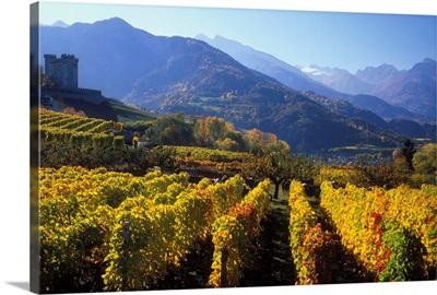 Italy, Valle d'Aosta, Gran Paradiso National Park, vineyards near Aymavilles