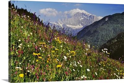 Italy, Veneto, Alps, Dolomites, Livinallongo del Col di Lana, Alpine meadow