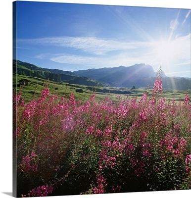 Italy, Veneto, Dolomites, View towards Settsass mountain group