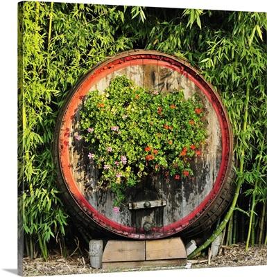 Italy, Veneto, Mediterranean area, Treviso district, Iris Vigneti Winery