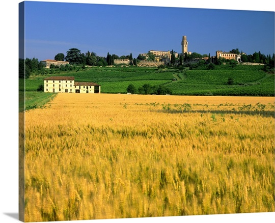 Italy, Veneto, Susegana, corn field and Collalto castle Wall Art ...