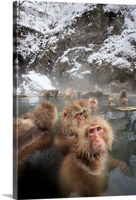 Japan, Chubu, Yamanouchi, Jigokudani Monkey Park, Snow Monkeys, Nagano