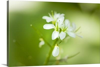 Japan, Hokkaido, Sapporo, Nopporo Forest, a flower