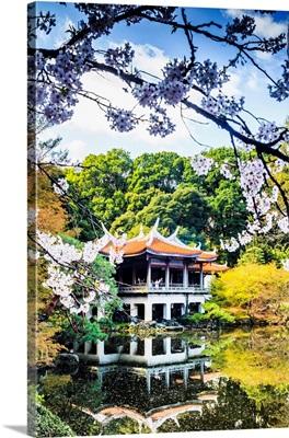 Japan, Kanto, Tokyo, Shinjuku, Cherry Blossom, Sakura, In Shinjuku Gyoen National Garden