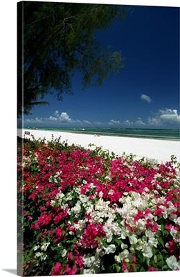 Kenya, Diani beach near Mombasa