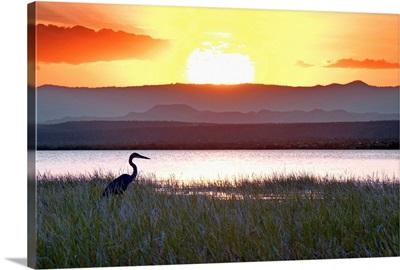 Kenya, Rift Valley, Loruk, A heron at sunset on the island of Ol Kokwe in Lake Baringo