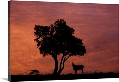 Kenya, Rift Valley, Masai Mara National Park, Sunset