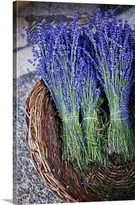 Lavander in a basket, France, Provence, Sault