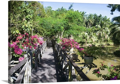 Malaysia, Sabah, The multicolored gardens of the Kabili-Sepilok Forest Reserve