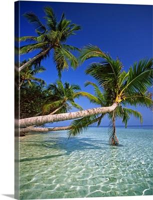 Maldives, Male Atoll, Thuru, Tropics, Indian ocean, Palms