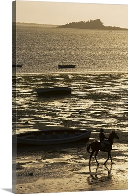 Mauritius, Rodrigues Island, Walk a horse along the beach during the low tide