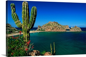 Mexico Baja California Sur Gulf Of California Sea Of