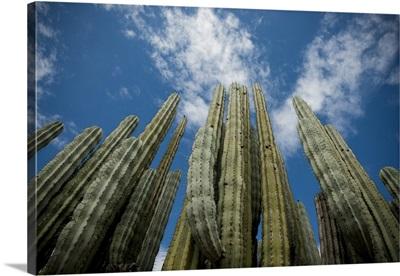 Mexico, Oaxaca, Reserva de la Biosfera de Tehucan-Cuitcatlan