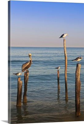 Mexico, Yucatan, Holbox, Birds on Wooden Posts in Sea
