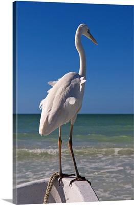 Mexico, Yucatan, Holbox, Tropics, White egret