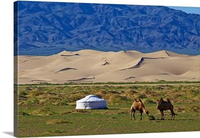 Mongolia, South Gobi, Gobi desert, Nomad camp in the Khongoryn Els dunes