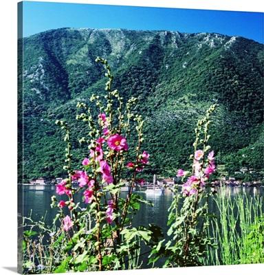 Montenegro, Kotor Bay, Stoliv village