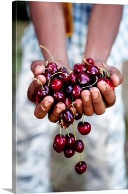 Morocco, Azrou, Cherries