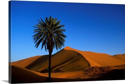 Morocco, Erg Chebbi Desert