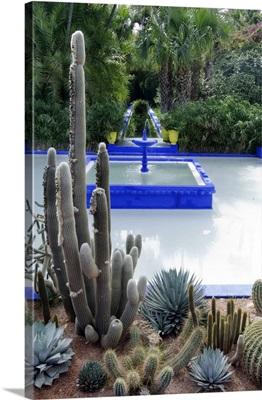 Morocco, Marrakech, Jardin Majorelle