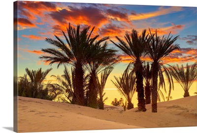 Morocco, South Morocco, Sahara Desert, Erg Chebbi Desert, Merzouga, Palm Trees At Sunset