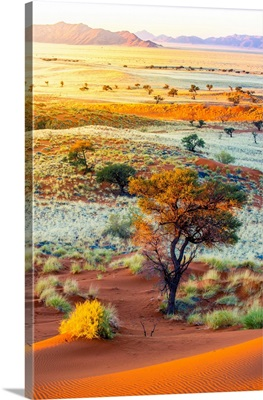 Namibia, Hardap, Namib Desert, Namib-Naukluft National Park, Petrified Dunes At Sunset