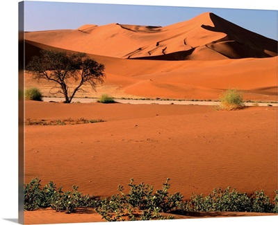 Namibia, Namib Dessert,  Namib Naukluft Park, Sossusvlei Dunes