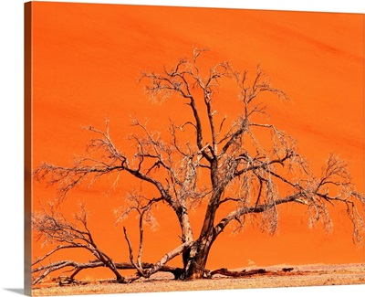 Namibia, Namib Dessert, Namib Naukluft Park, Sossusvlei Dunes, tree